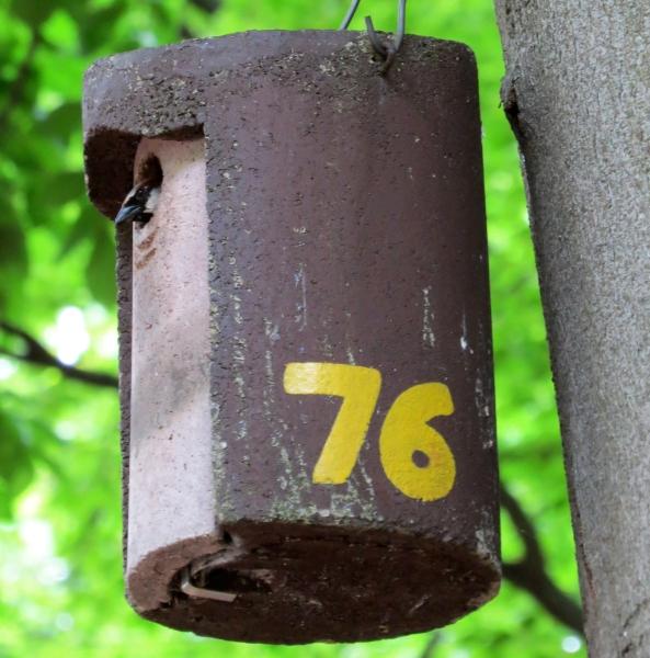 Sparrow Bird House Plans Free Recondite95tli